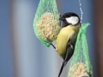 RATUJMY NASZĄ PLANETĘ - Jak mądrze dokarmiać ptaki?